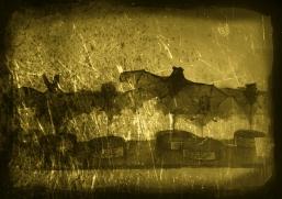 daguerrotype2