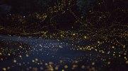 luciernaga_firefly_tsuneaki_hiramitsu_cultura_inquieta7