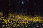 luciernaga_firefly_tsuneaki_hiramitsu_cultura_inquieta8